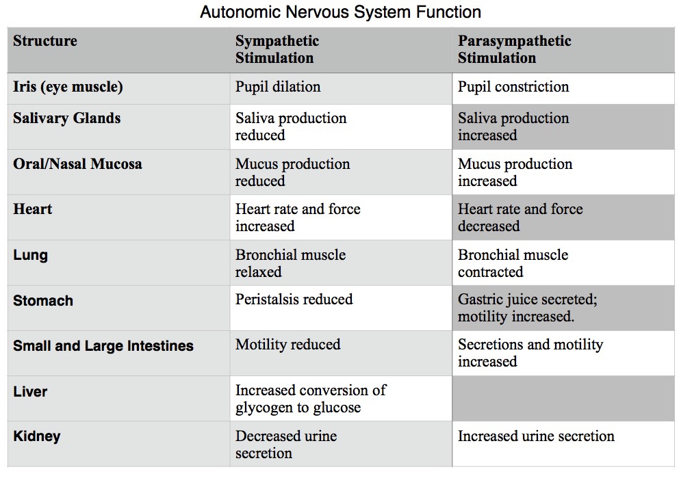 difference between sympathetic and parasympathetic nervous system pdf